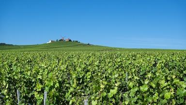 ENDOCRINOLOGIE : Remplacementdu 03/04/2018 au 31/05/2018 pour un(e) endocrinologue - Champagne Ardenne (51)